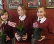Hyacinths from 5th