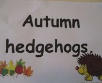 Seniors' Hedgehogs
